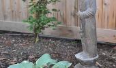 Whimsical Garden Monk